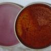 Na objednání - 200 Kč /ks (dle velikosti a barvy glazury) dodací doba 3 týdny (dle objednaných kusů)