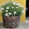 na objednávku - květináč, průměr cca 35 cm, cca 1000 Kč